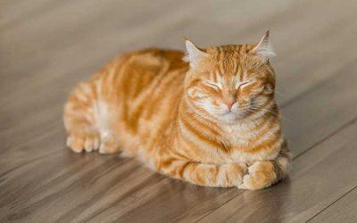 Do Cats have Nine Lives?