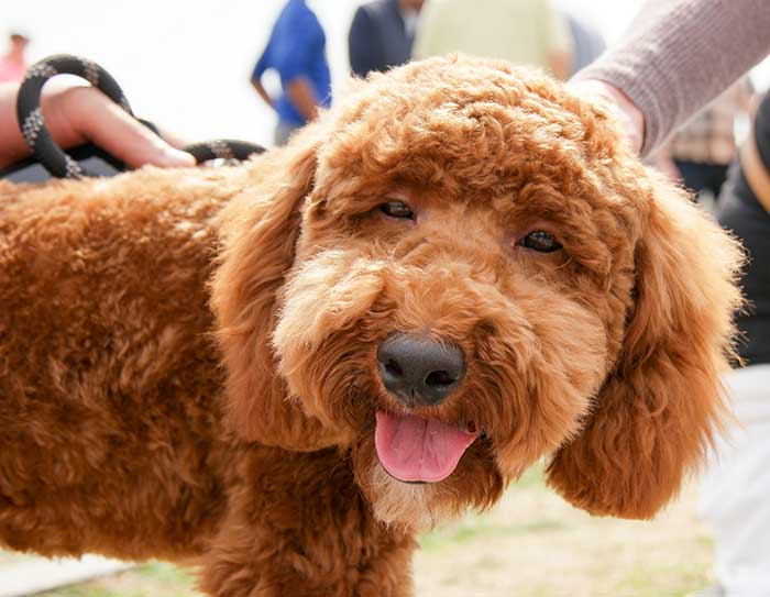 Ask Your Veterinarian: A Holistic Approach
